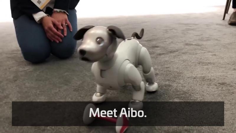 Meet Aibo
