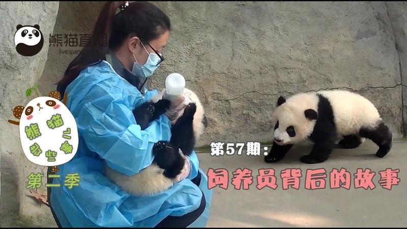 《熊貓那些事兒2》— Ep57 飼養員背後的故事 20160714 | iPanda