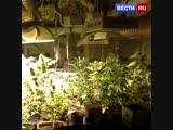 Шизофреник-рецидивист превратил московскую квартиру в наркоплантацию