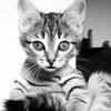 Дрессировка кошек. Иллюстрированное руководство.