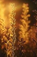 Отцвели цветы, падают листья, птицы молчат, лес пустеет и затихает.ОСЕНЬ. - Страница 15 LhjI45QWF8A