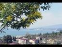 Сирийских беженцев в Абхазии принимают радушно