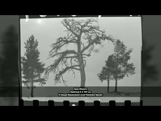 """Видео-экскурсия в Калевалу, к """"Сосне Лённрота"""""""