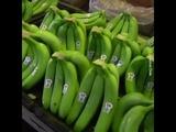 Banana Industry Plantation in South America - Industri Pisang di AmSel