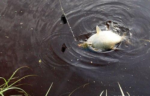 Нет рыбы большей, чем сорвавшаяся с крючка.