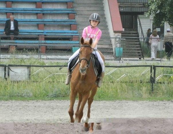 тонкостей конного спорта.
