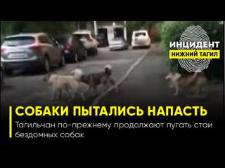 Стая бездомных собак в Дзержинском районе