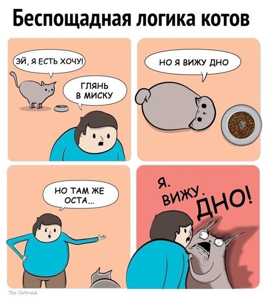 Кошачья логика