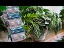 ЯНТАРНАЯ КИСЛОТА скорая помощь для комнатных растений Это важно знать Это важно знать