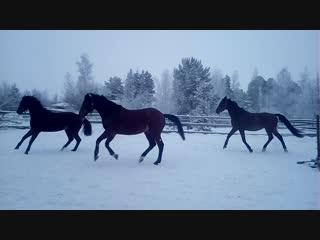 Лошадки постояли денечек один и вот, что из этого вышло😃😃😃