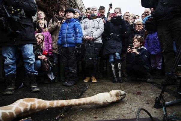 """""""Просвещенная"""" Европа: права для извращенцев, смерть для жирафа. - Страница 5 SRj86GV0iXg"""