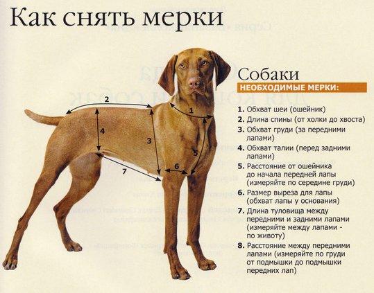 Как правильно купить одежду для собаки