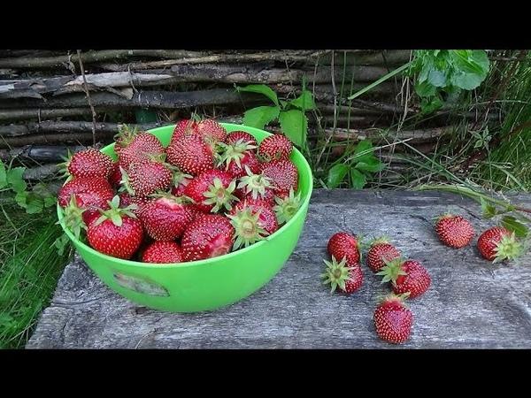 Пришло лето и к нам! Мой сад и огород на даче. 2016 г.