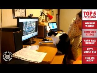 Кошки повсюду. Помыть окно, атаковать монитор, размотать пряжу, под кроватью, идём кушать.)))
