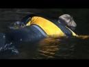 Величайшие явления природы 2 серия Великий исход лосося