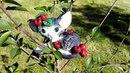 Миниатюрная статуэтка котика с вишней