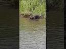 Медведь проверяет сети