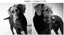 Как взрослеют собаки - любопытный и трогательный фотопроект