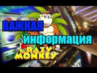 как играть в казино вулкан? игровые автоматы crazy monkey(обезьяна/обзьянка) обзор / отзывы о казино