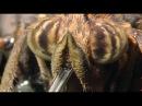 Маленькие монстры Документальный фильм о животных 12