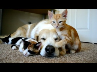 Спящая собака с котятами