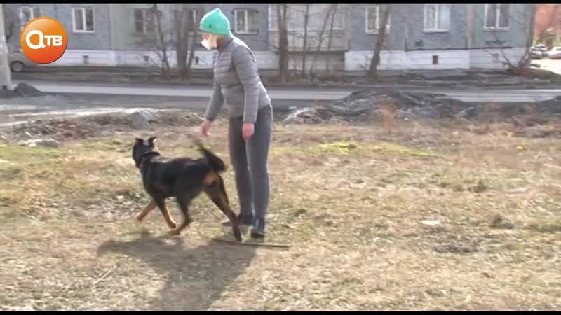 Собачники против Костюченко