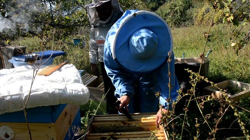 Сколько принесли мёда майские отводки?