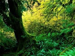 Фото слайд-шоу Природа. Деревья. Лес. Часть 2.