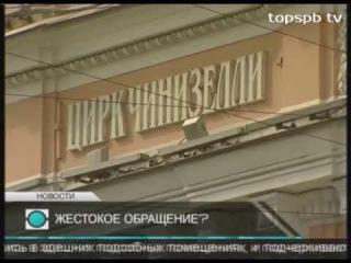 Телеканал «Санкт-Петербург» - В Петербурге зоозащитники сняли фильм о жизни циркового закулисья