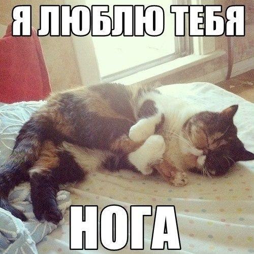 Весна, у всех любовь. А у меня нога есть)/Ахаха, и у меня она есть ...