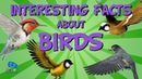 Interesting Facts about Birds | Educational Video for Kids.