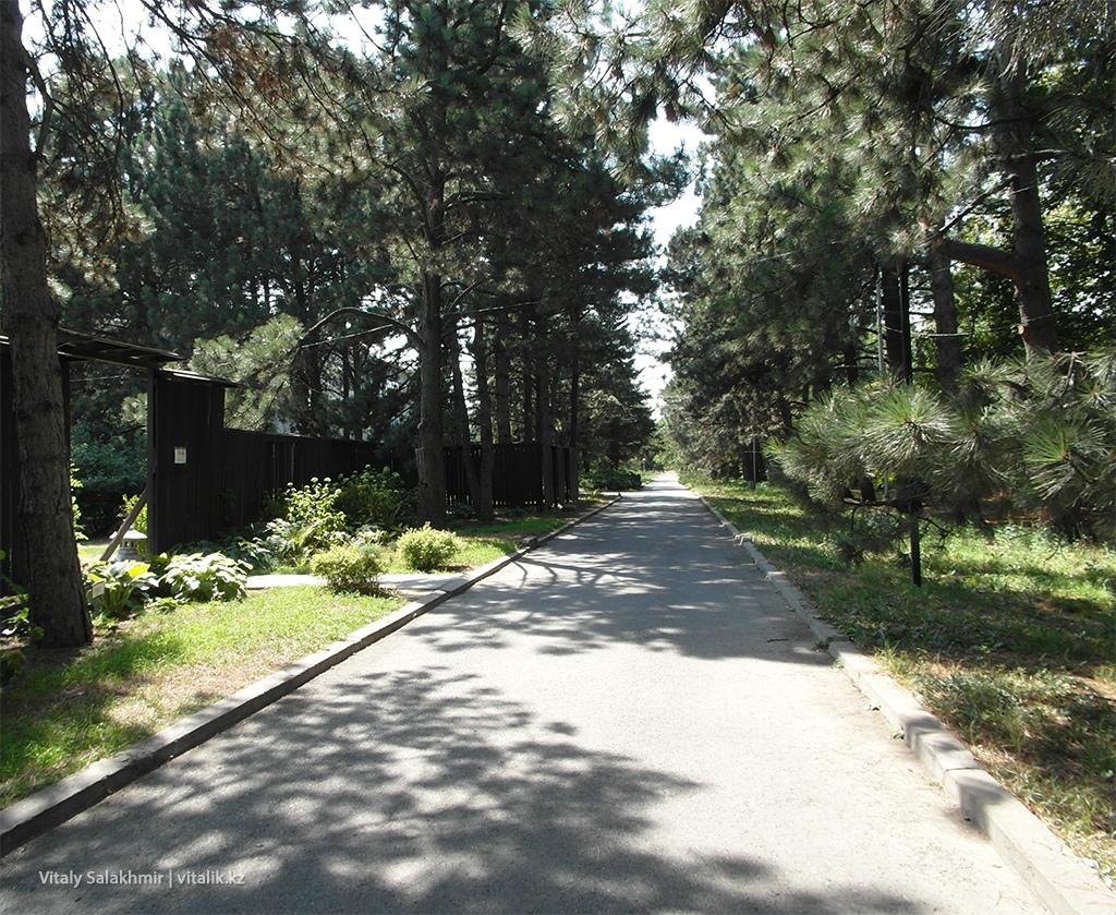 Сосновая аллея, Ботанический сад Алматы 2018