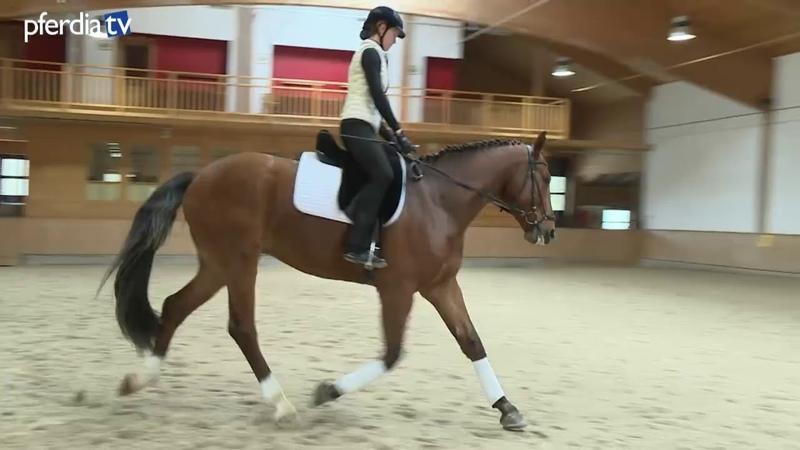 Rüdiger: Muskelaufbau Kontrolle von Vor- und Hinterhand | Anja Beran