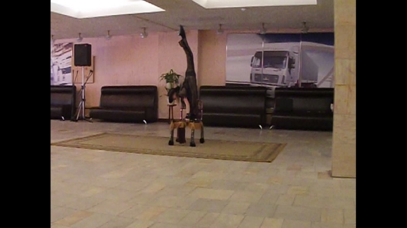 Выступление на избирательном участке, цирковая студия «Романтики» композиция - Ковбой!