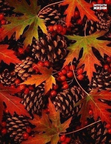 Грустит природа в ноябре… Холодный кружит ветер Последний листик во дворе, Как памятку о лете. Также по теме
