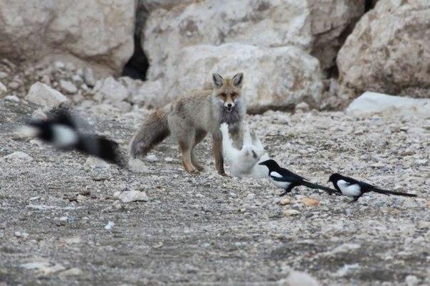 Интересные ролики про животных