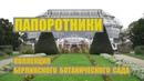 Коллекция папоротников Берлинского ботанического сада