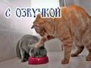 ПРИКОЛЫ С КОТАМИ С ОЗВУЧКОЙ на русском Смешные коты и кошки 2018 ПОПРОБУЙ не смеяться