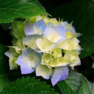 Акакий Цветков