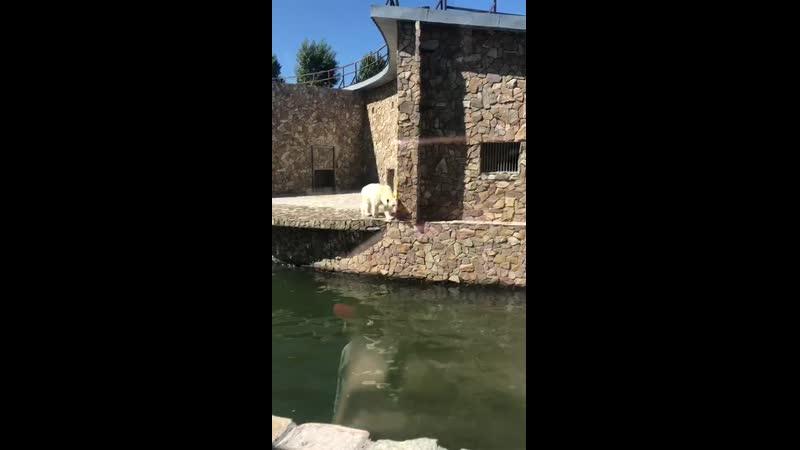 VIDEO-2019-06-03-17-14-13.mp4