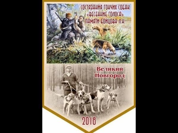 Состязания гончих собак Весенние Голоса памяти Бойцова Л Н