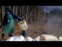 Слив кислоты в землю и гибель леса. Real video