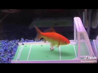 Wow!! crazy!! have you heard that_ what_ he is a talented soccer ball play ( 342 x 612 ).mp4
