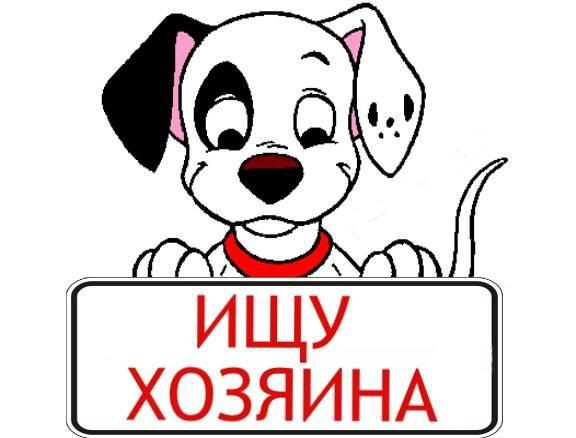 Картинка с надписью продам щенки