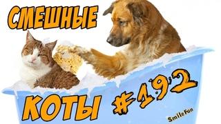 Приколы с Котами ДО СЛЁЗ Смешные коты 2018 Угарные кошки