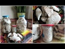 Приправа из сушёных грибов Зонтиков