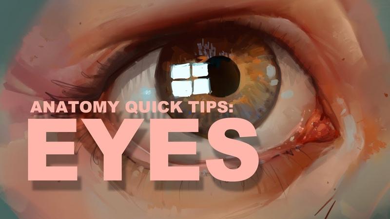 Anatomy Quick Tips Eyes