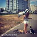 Если вы не любите собак, вы не любите верность; вы не любите тех, кто верен вам…
