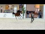 Sharjah international Arabian Horse Show مهرجان الشارقة للخيول