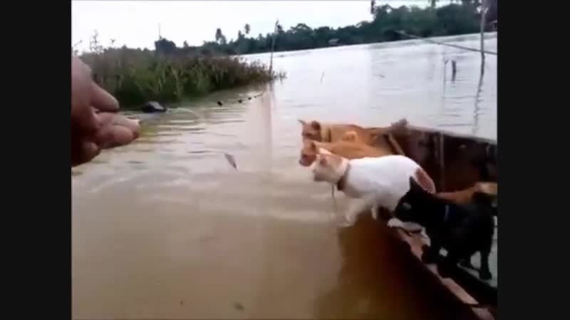 Вакансии в рыбнадзоре.